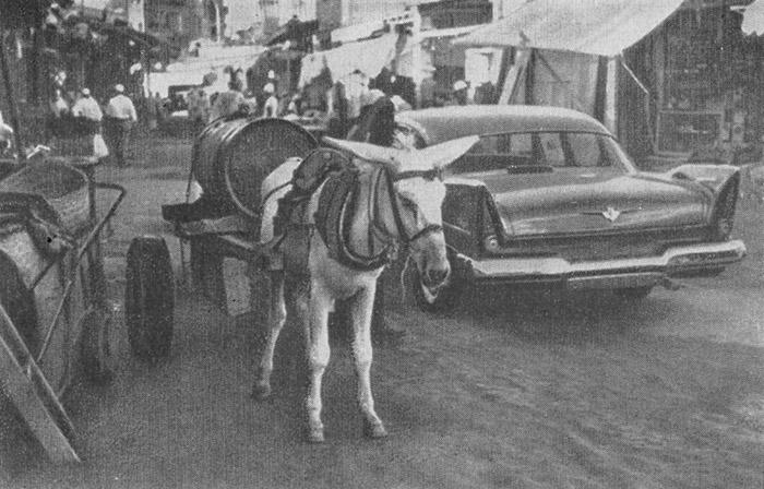 Накопить незабываемый опыт знакомства культурой бедуинов езде верблюдах пустыне созерцани www знакомства ростов ru
